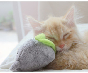 cat, teddy, and cute image
