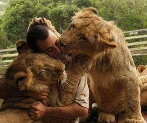 friendship, lion, and love image