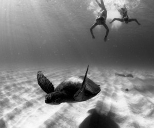 turtle, beach, and black and white image