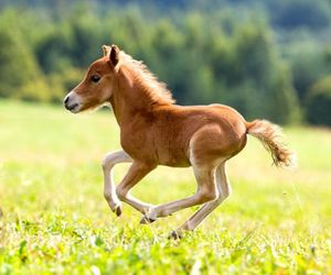 horse, cute, and adorable image