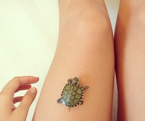 baby turtle, summer, and adorable image