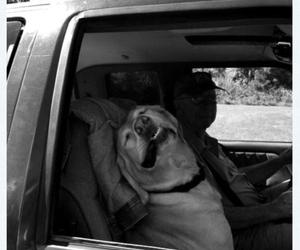 dog, funny, and sleep image