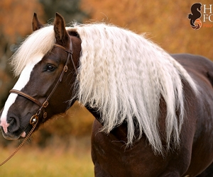 awesome, beautiful, and horse image