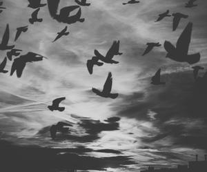 bird, sky, and fly image