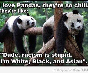 panda, racism, and asian image