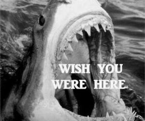 shark, wish, and funny image
