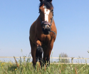free, horse, and horses image