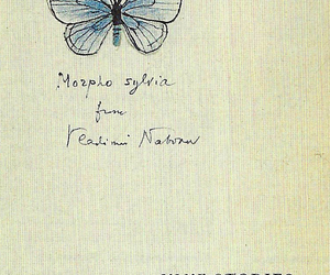 butterfly, imaginary, and nabokov image