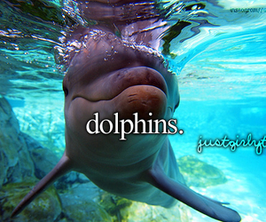 dolphin, animal, and just girly things image