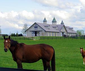 barn, horses, and kentucky image