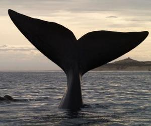 oceano and whales image