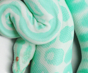 snake, pink, and animal image