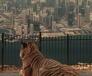 tiger, city, and animal image