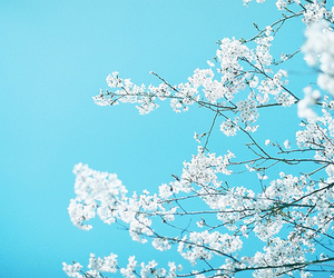 flowers, blue, and sky image