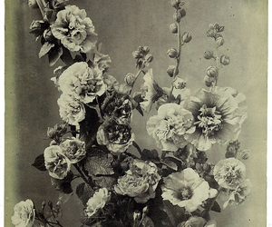 black & white, floral, and flowers image