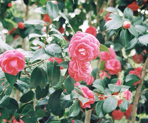 camellia and flowers image