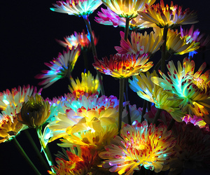 flowers, colors, and light image