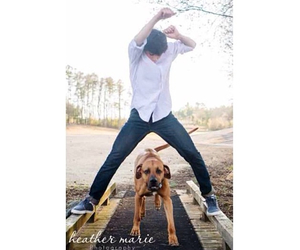 dog and hayes grier image