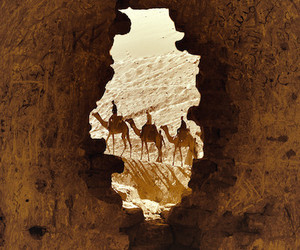 egypt and nature image