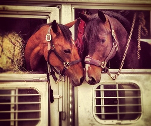 horse, cute, and love image
