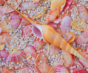 shell, pink, and beach image