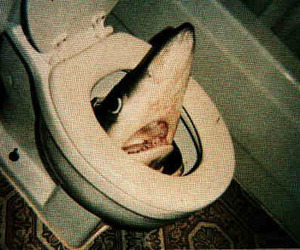 shark and toilet image
