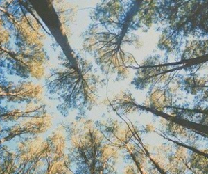 header, sky, and trees image