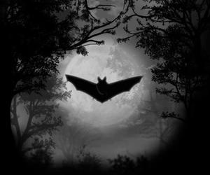 night, bat, and Darkness image
