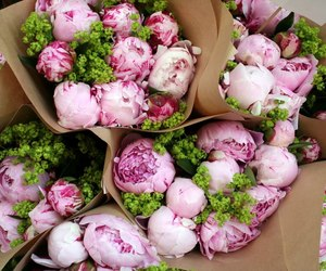 bouquet and paeonia image