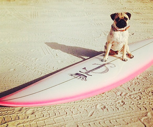 dog, beach, and pink image