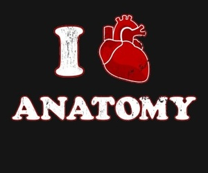 anatomy, heart, and medicine image