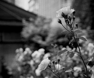 flowers, black and white, and beautiful image