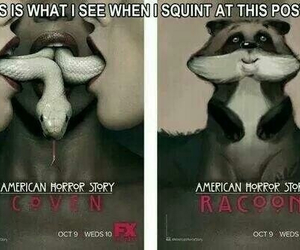 funny, american horror story, and coven image