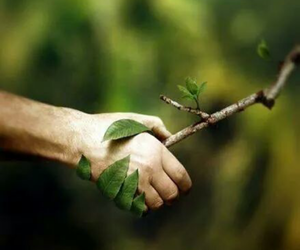 nature, tree, and hand image