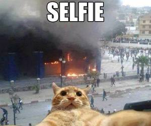 selfie, cat, and funny image