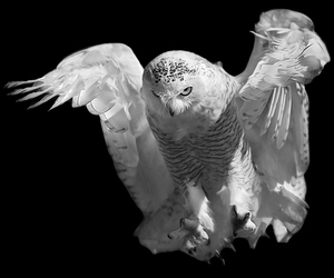 animal, Darkness, and b&w image