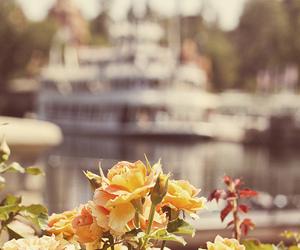 bokeh, roses, and disneyland resort image