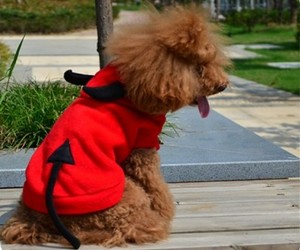 dog costume, pet costumes, and pet costume for dog image