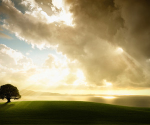 clouds, sun, and tree image