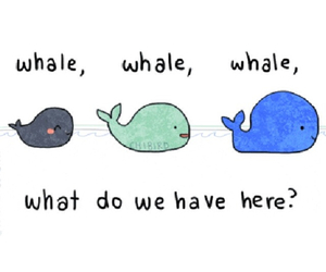 whale, funny, and animal image