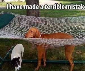 dog, funny, and mistakes image