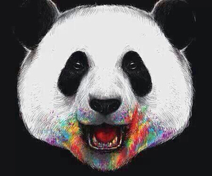 panda, colors, and rainbow image