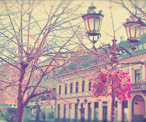 cherry blossoms, lamps, and cool image