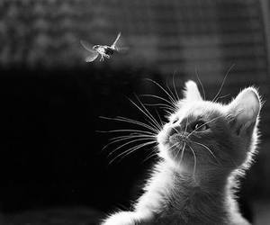 cat and bird image