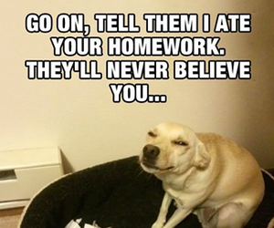 dog, funny, and homework image
