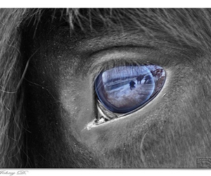 horse, loveit, and sweet image