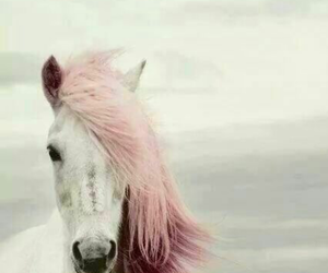 horse, lovely, and pink image