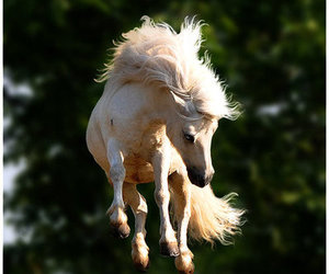 horse, jump, and pony image