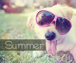 awesome, dog, and happy image