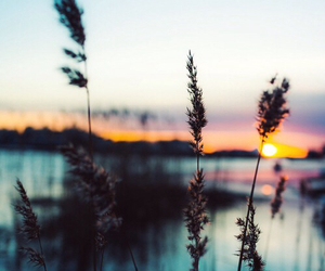 nature, sunset, and photography image